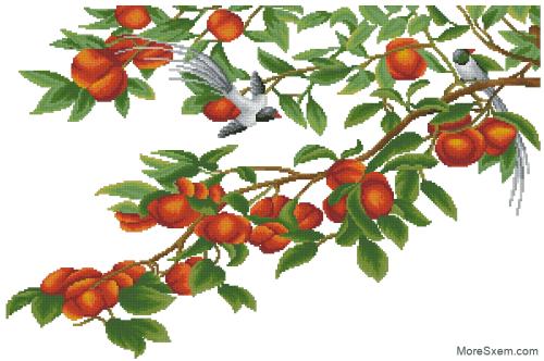 Абрикосы и райские птицы