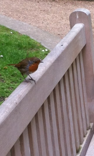 bird in the pARK2