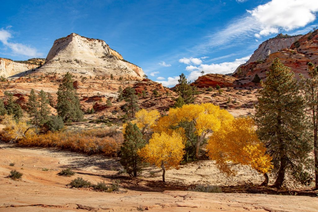 fall zion national park