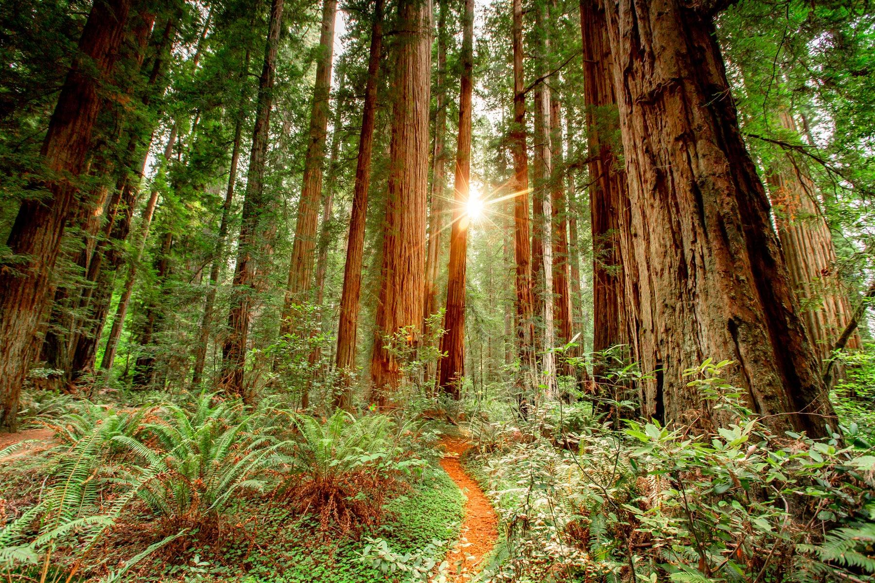 STUNNING Redwood National Park (Guide + Award-Winning Film)