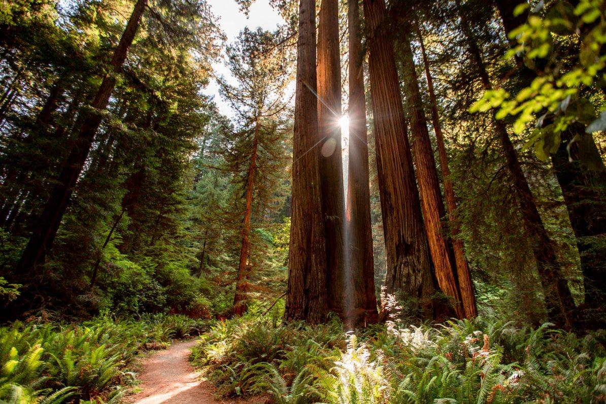 boy scout tree trail redwood national park