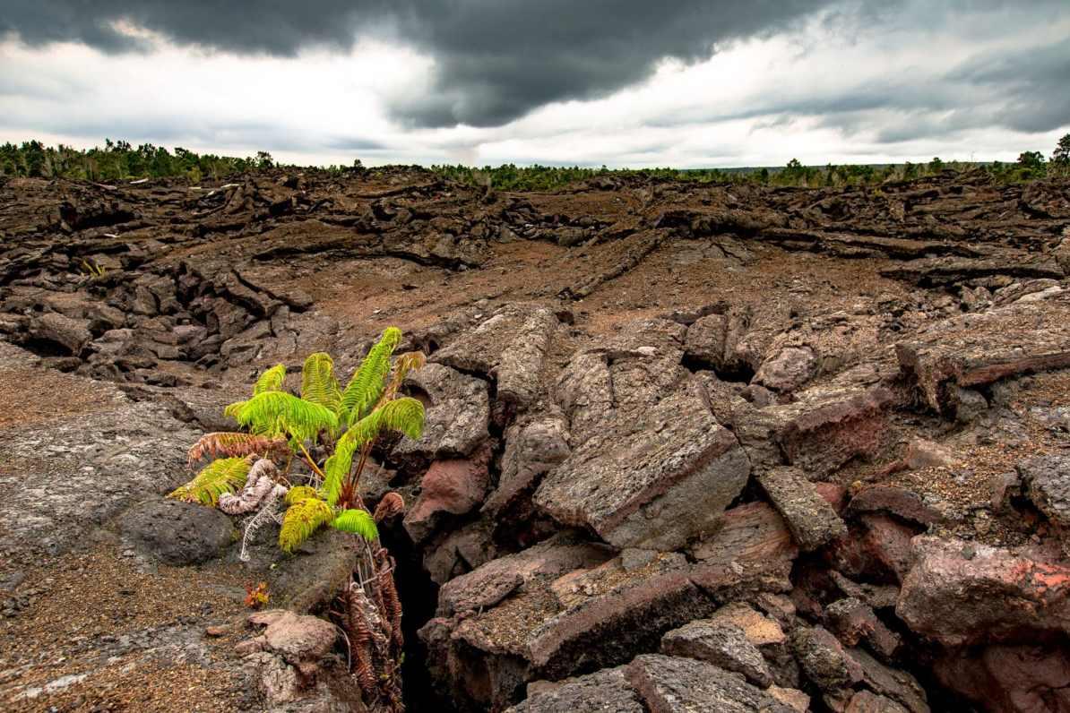 spring in hawaii volcanoes national park