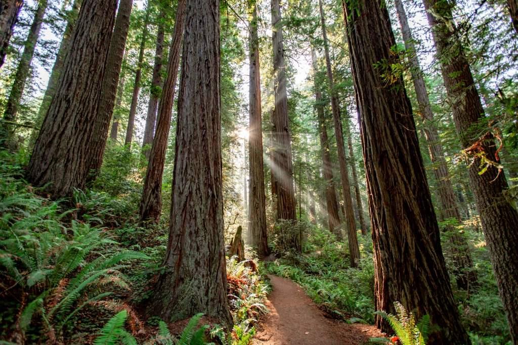sun flare redwood national park