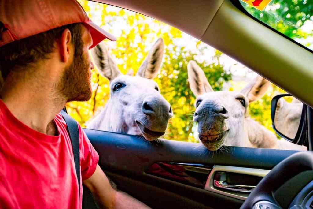 virgin islands national park burros