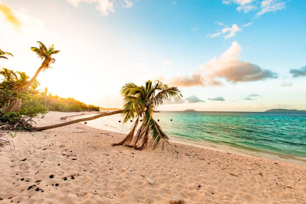 virgin islands national park palm trees