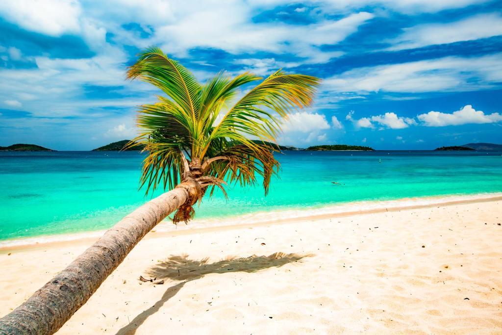 honeymoon beach st john virgin islands national park palm trees