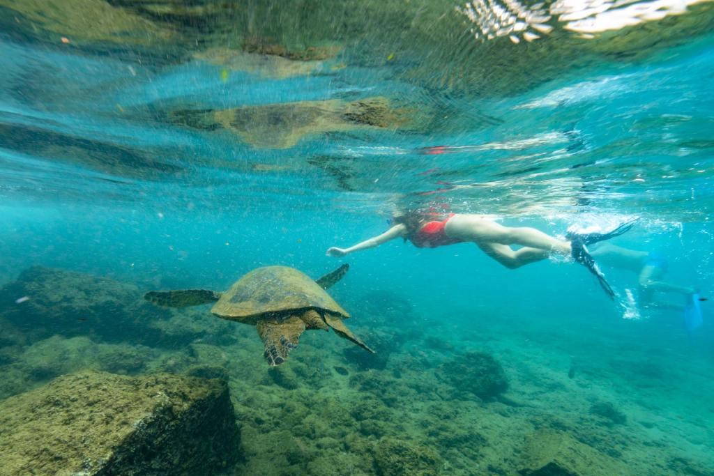 snorkeling maho bay virgin islands national park st john sea turtles