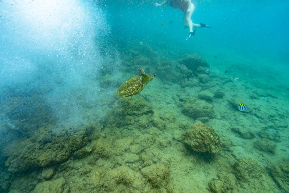 st john snorkeling virgin islands national park trunk bay