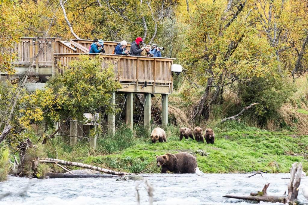 brooks falls viewing platform katmai national park alaska, national park wildlife