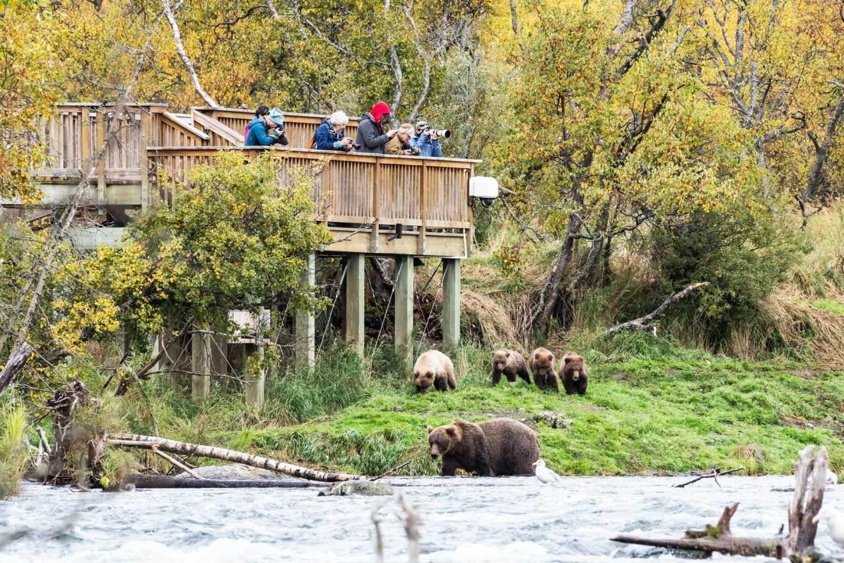 brooks falls viewing platform katmai national park alaska