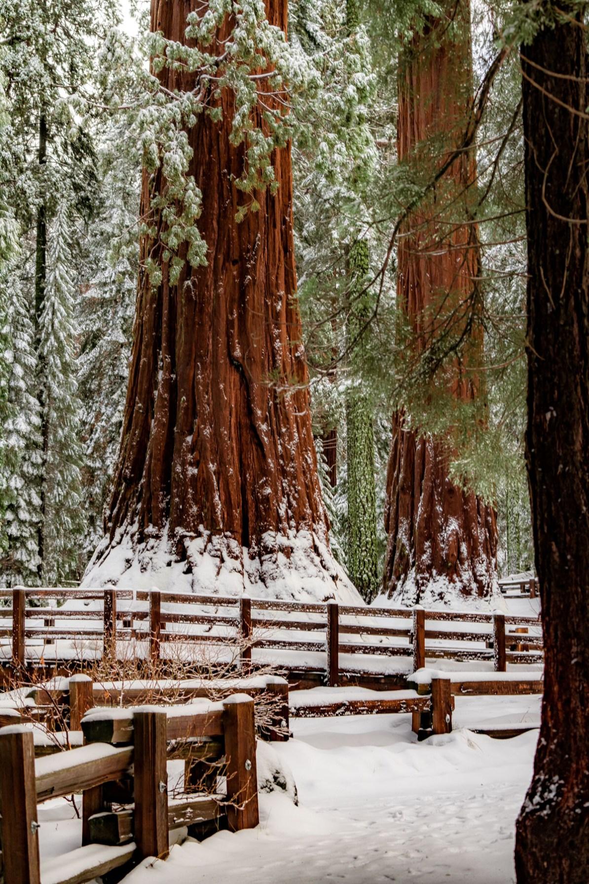 general sherman tree sequoia national park california