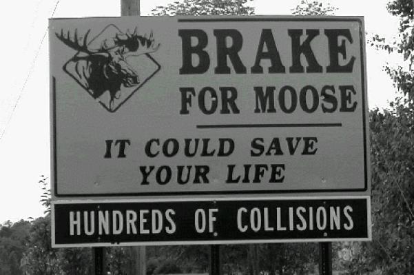 environmental activist, famous environmentalist, moose sign