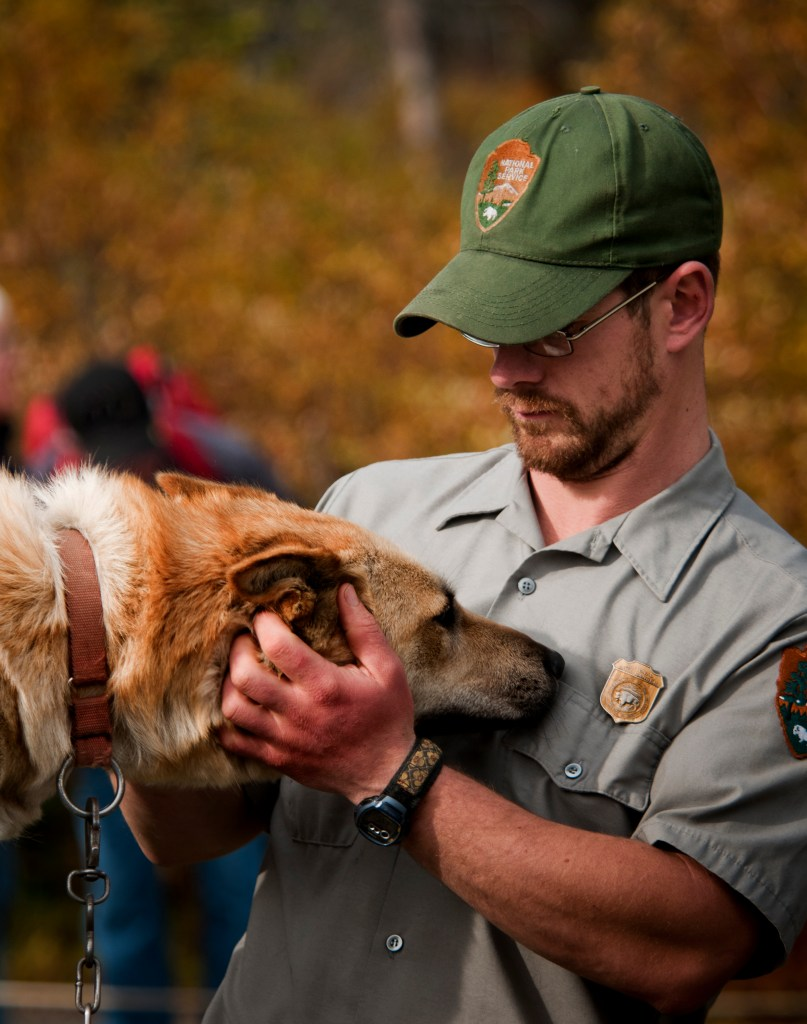 Yellowstone National Park Facts include that the Yellowstone Park Protection Act helped to bring about the establishment of park rangers.