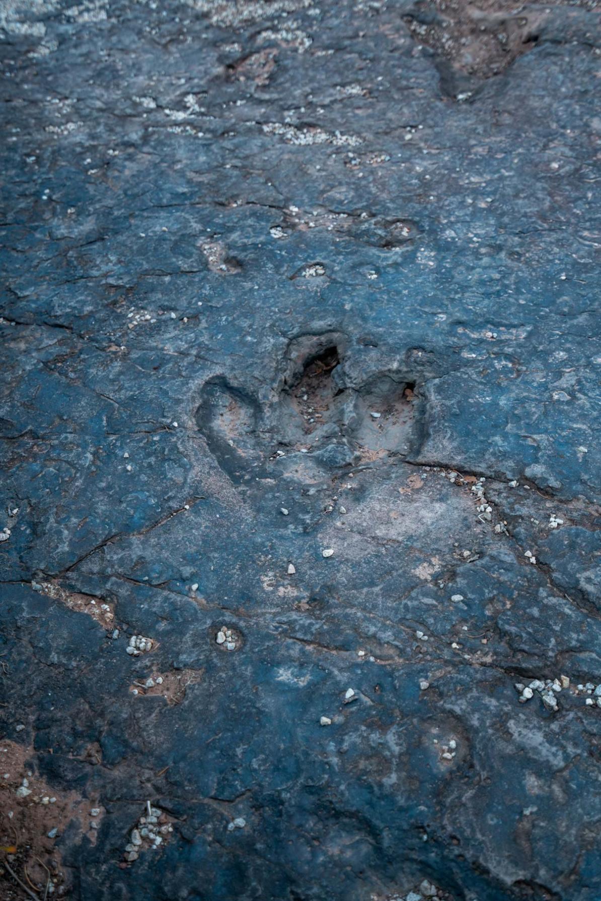 dinosaur tracks manti la sal national forest utah