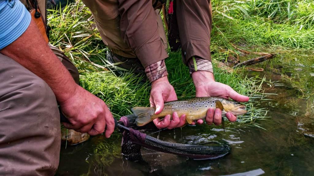 fly fishing black hills national forest south dakota