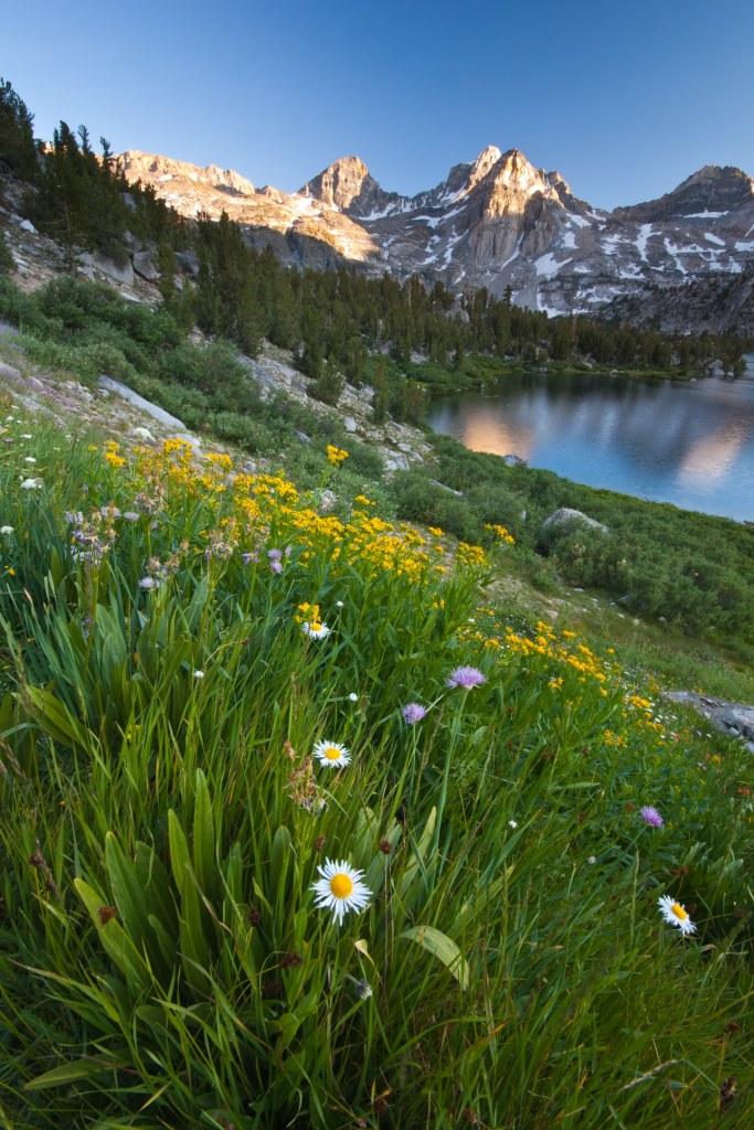 Rae Lakes Wildflowers at Kings Canyon   General Grant Tree