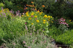 Color-FULL Small Gardens