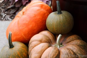 Growing Cinderella Pumpkins & Other Not-So-Fairy-Tale Pumpkins