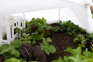 Frost Protective Covers ~ Extending the Keyhole Garden Season