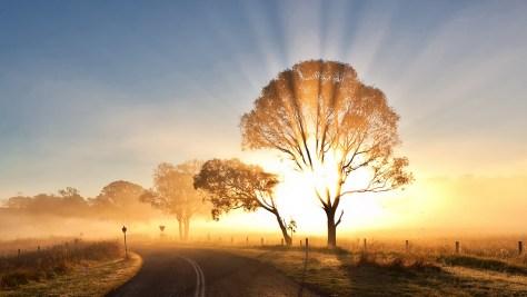 morning-mist-picture-desktop-wallpaper-a6eky309