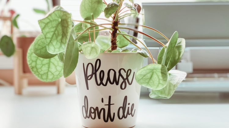 DIY Funny Plant Pot Decal with Cricut Explore 3
