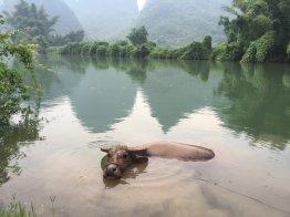 Our swimming companion