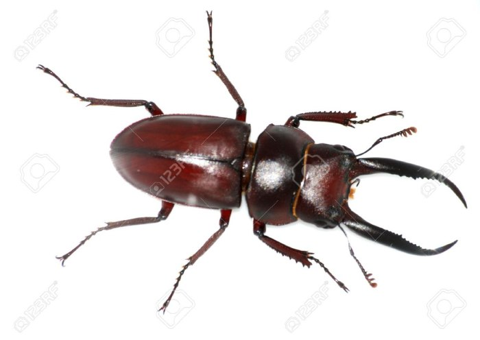 Stag bug is presently the most expensive insect./bug on the planet for its expense is 9.7 million Kenya shillings.