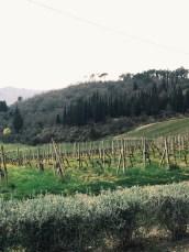 Tuscan views
