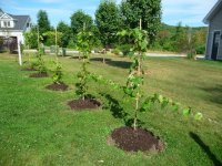 Backyard Grape Trellis | Outdoor Goods