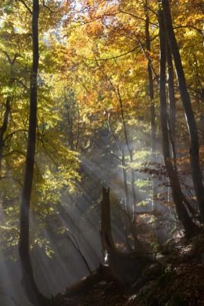 Lumière d'automne dans le bois de Poussebou