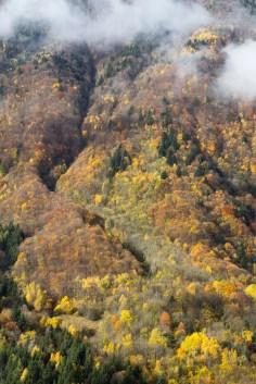 Multitude des couleurs d'automne