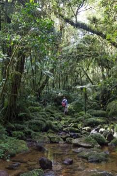 Notre guide local au milieu de la forêt de Ranomafana