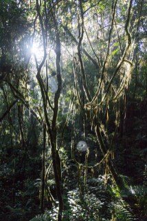 La lumière s'infiltre dans la forêt humide pour permettre le développement d'une végétation luxuriante
