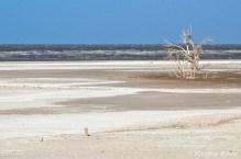Sonny Bono Salton Sea
