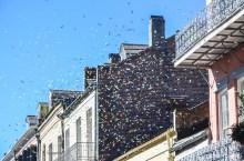 New Orleans: French Quarter celebration