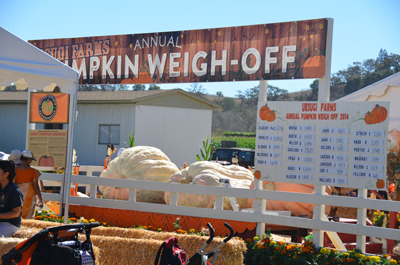 Napa couple takes home first prize in Uesugi Farms pumpkin