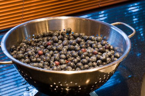blueberrycolander