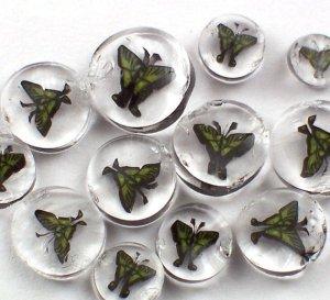 chase-swallowtailmurrini