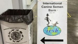 dog-bank