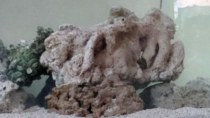 coral tank live rock
