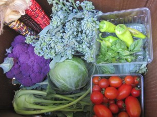Fall harvest share for 1 week-Vegetable CSA