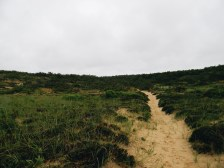 cedar swamp trail in wellfleet, ma