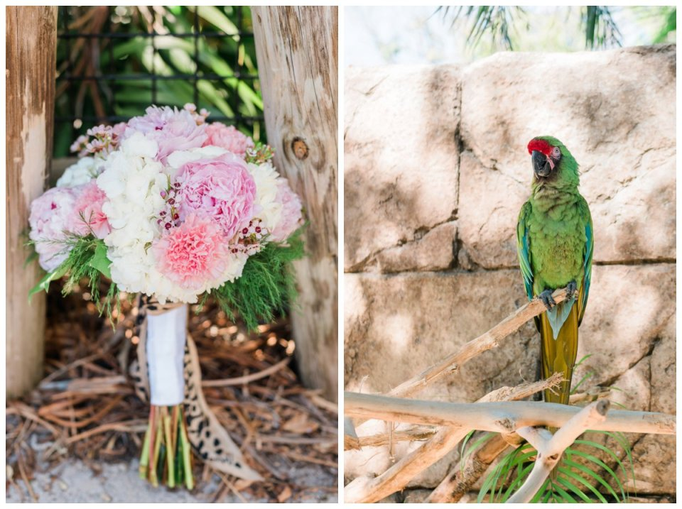 bridal bouquet and animal at zoo
