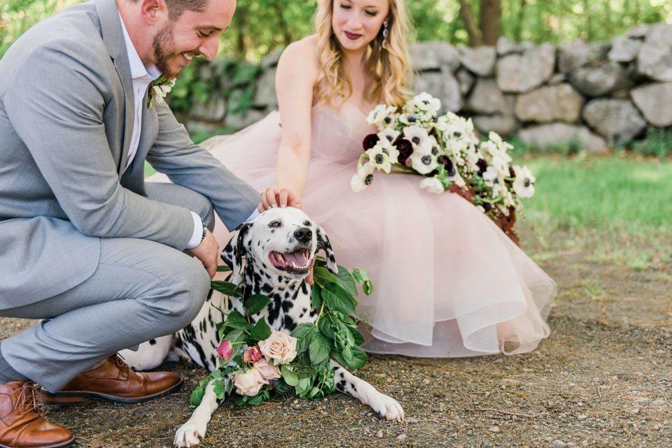 Glen Magna Farms wedding photos with a dog