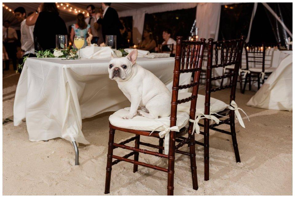 A french bulldog at a wedding reception in islamorada