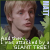 windiain_matt-tree