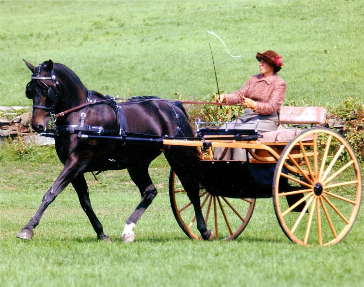 Part 1 – Selling Carriage Horses Online