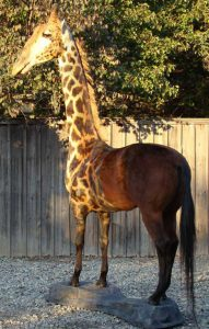 Giraffe Horse