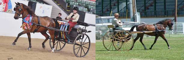 Carriage Driving and Combined Driving
