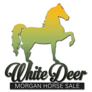 White Deer Morgan Horse Sale